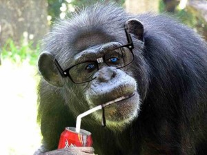 chimpanzee-03