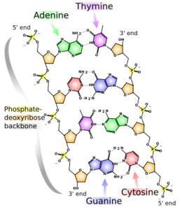 DNAstructure