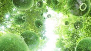 e1d9b084_fotosintez
